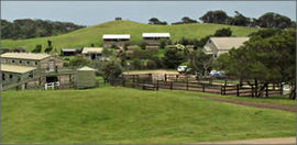 Ace Hi Riding Ranch - Accommodation Melbourne