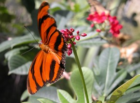 Butterfly Farm - Accommodation Melbourne