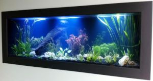 Aquariums in Cairns - Accommodation Melbourne