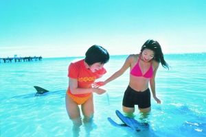 Monkey Mia Dolphins  Shark Bay Air Tour From Perth - Accommodation Melbourne