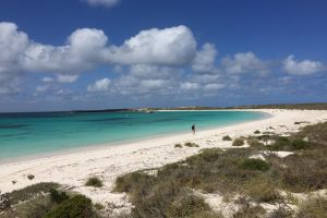 Abrolhos Island Half Day Fly and Flipper - Accommodation Melbourne
